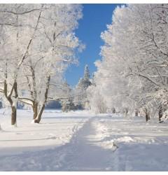 Snowdrift waxmelt