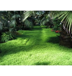 Green Oasis Waxmelt