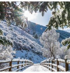Aspen Winter Waxmelt