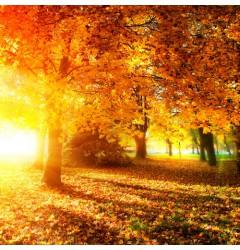 Autumn Wood Waxmelt