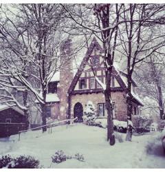 Wintergarden Waxmelt